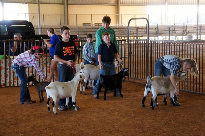 Junior LA Goat Association Show